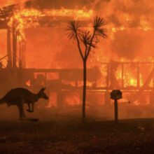 Was There A Silver Lining To Australia's 2020 Bush Fires?